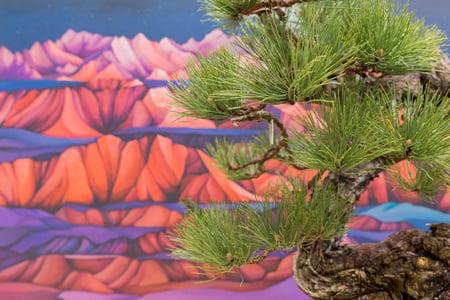 Natives Exhibit Pacific Bonsai Museum