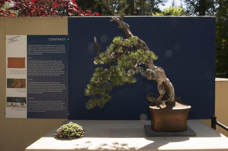 LAB Pine